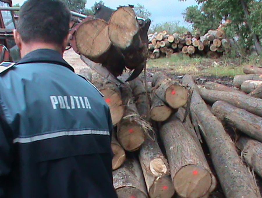 Patronul unei firme de exploatare a lemnului, amendat de trei ori într-o zi