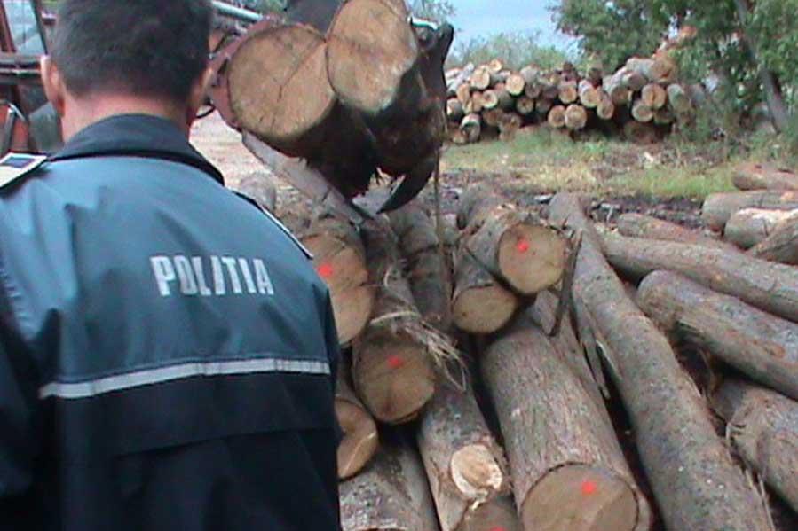 Bărbat cercetat pentru furt și tăiere ilegală de arbori, la Dobra