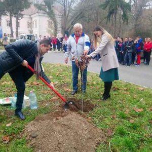 , Dedicat Centenarului. A fost plantat un stejar în apropierea muzeului din Deva