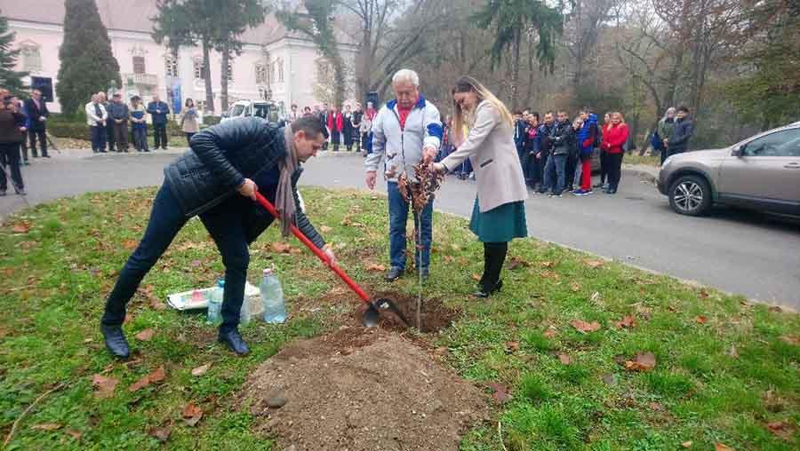Dedicat Centenarului. A fost plantat un stejar în apropierea muzeului din Deva