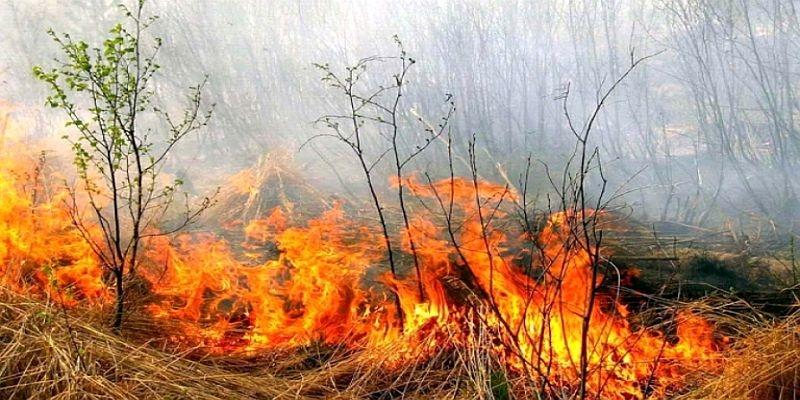 Apel către populație pentru prevenirea incendiilor de pădure