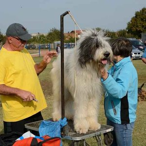 Cei mai frumoşi şi deştepţi câini, în expoziţie la Simeria