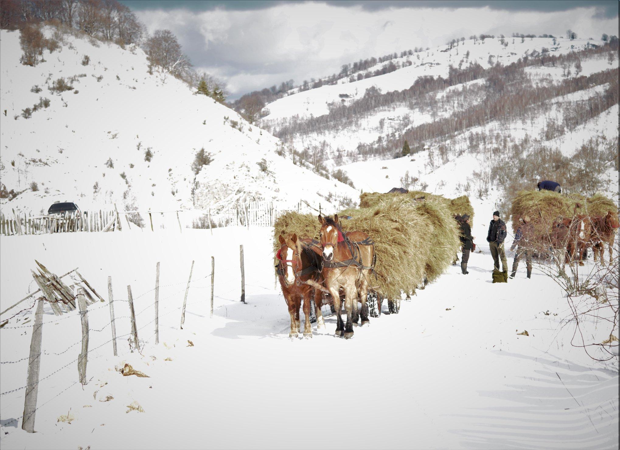 FOTO| Iarna în Parcul Natural Grădiștea Muncelului -Cioclovina. Peisaje de tablou, surprinse în fotografii
