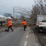Atenție, șoferi! Un plop a căzut din cauza vântului puternic pe DN7, în Orăștie. Traficul rutier, dirijat de polițiști