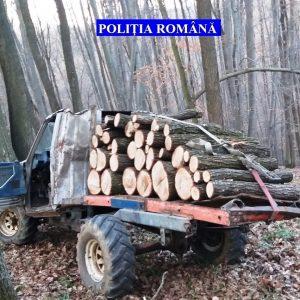 Trei tineri, care au pus la pământ, cu drujbele, peste 100 de arbori, reținuți de polițiști