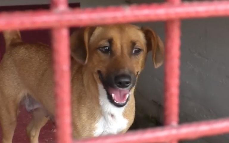 """""""Târg de adopții"""" la Hunedoara. Zeci de câini fără stăpân își caută familii iubitoare"""