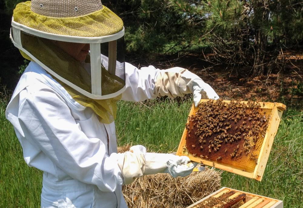 Peste 430 de apicultori hunedoreni primesc ajutor de minimis
