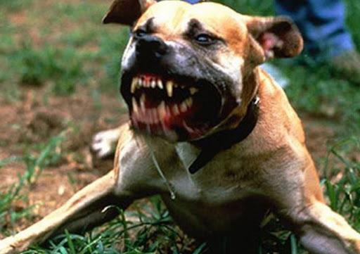 Câini lăsați nesupravegheați au omorât mai multe găini și un câine dintr-o gospodărie. Jandarmii au sancționat proprietarul patrupedelor