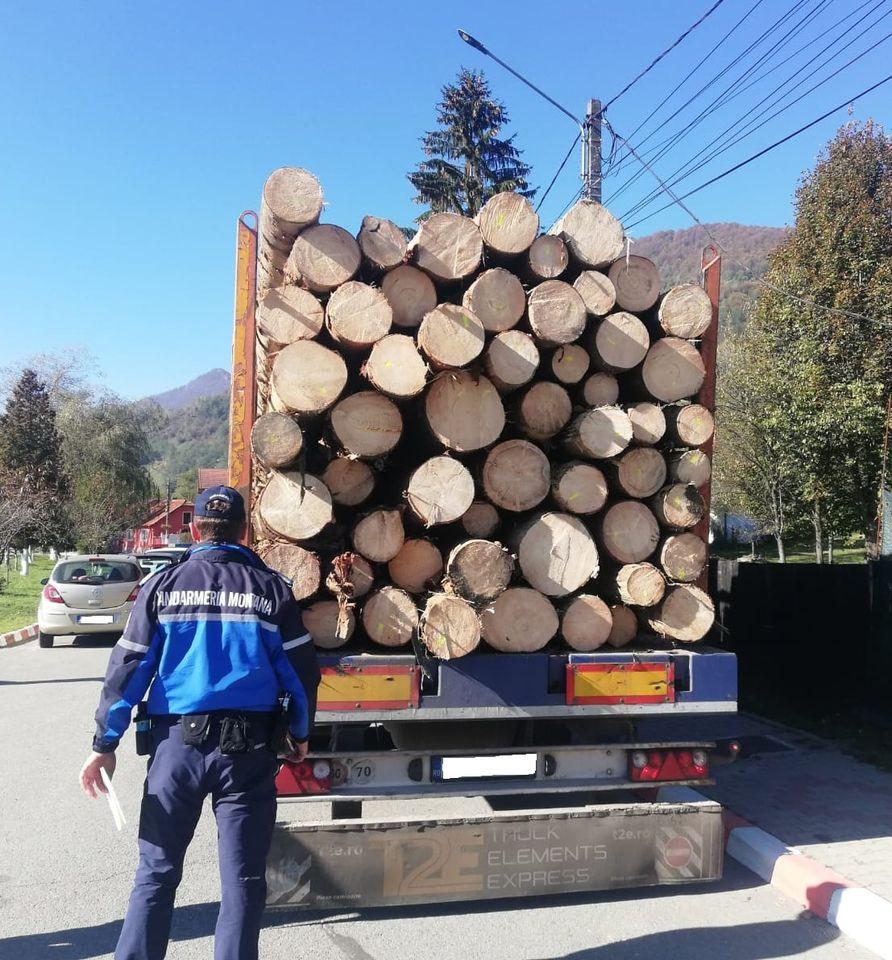 Transport ilegal de material lemnos, în Petrila