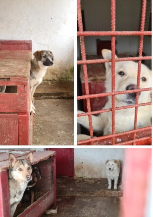 Un nou târg de adopții, la adăpostul de la Hunedoara. Peste o sută de câini își caută stăpâni iubitori