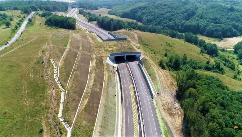 Construcția tunelurilor pentru urși, de pe A1, ar putea începe în curând