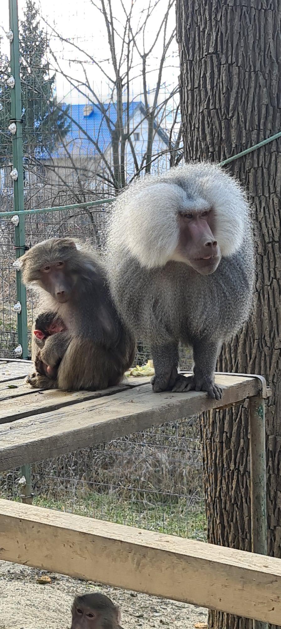Numele noului locatar al Zoo Hunedoara, ales până duminică