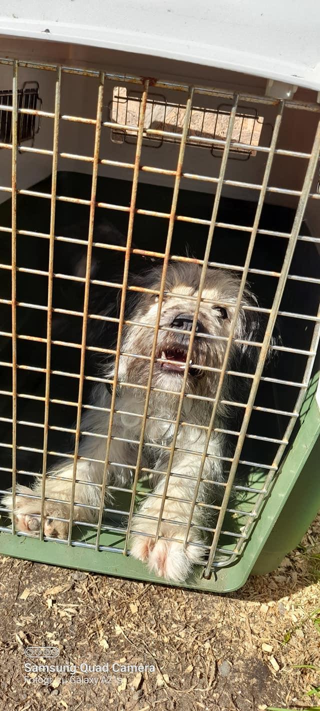 Campanie de sterilizare gratuită a câinilor și pisicilor, la Mintia