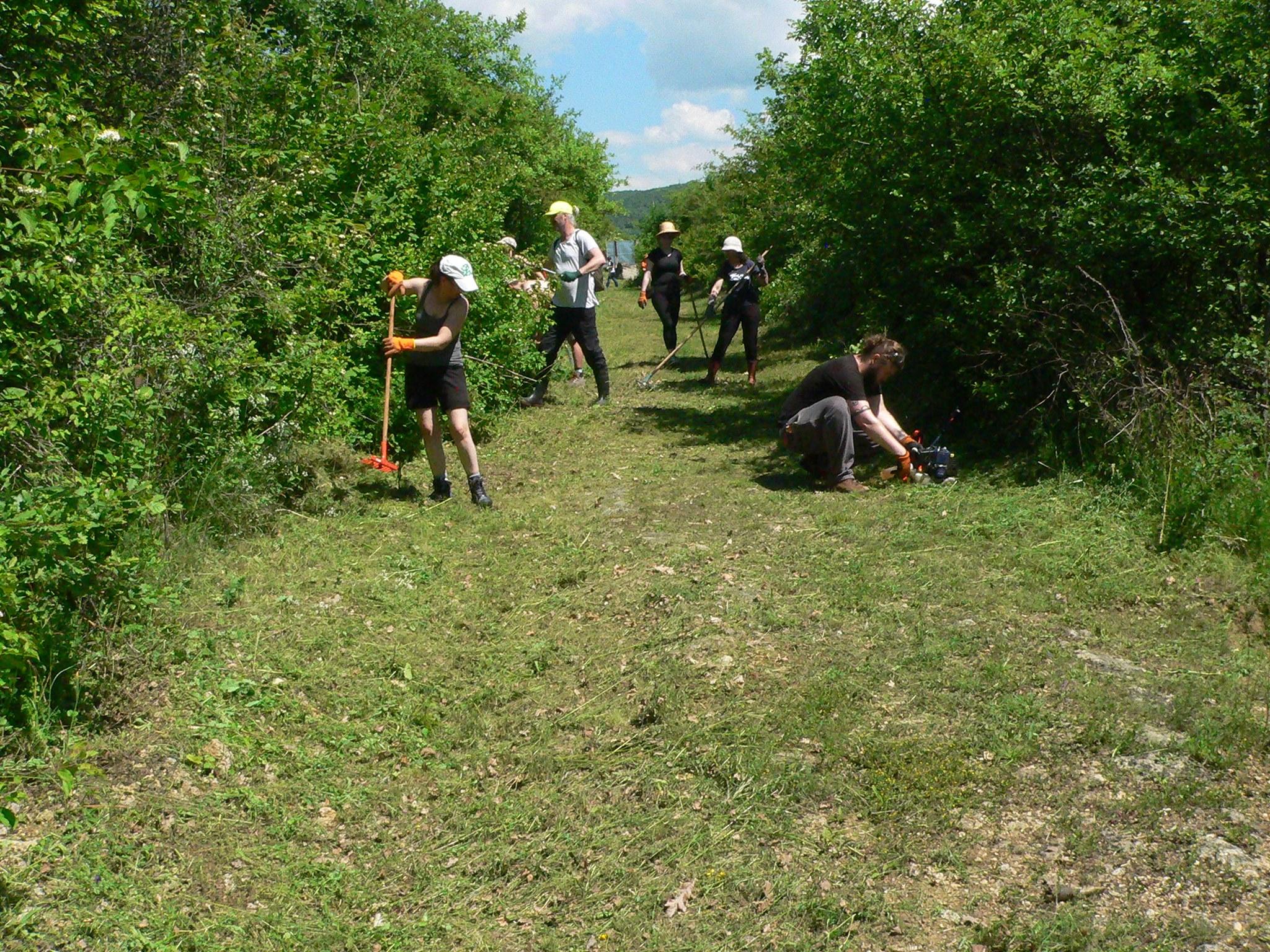 """Drumul antic roman de la Geoagiu, năpădit de vegetație, curățat de membri ai Asociației """"Terra Dacica Aeterna"""", însoțiți de voluntari"""