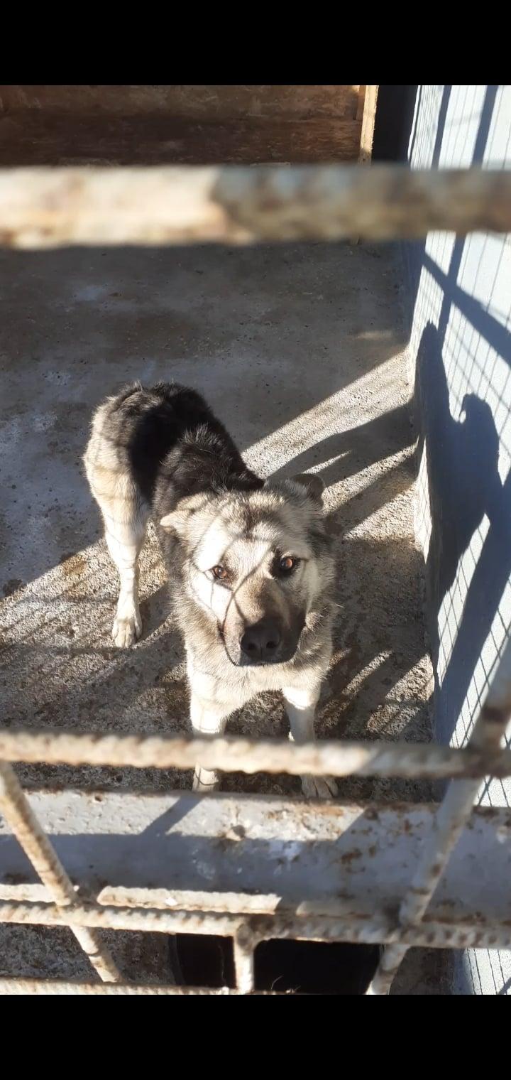 Câine, salvat de polițiștii locali din Petroșani
