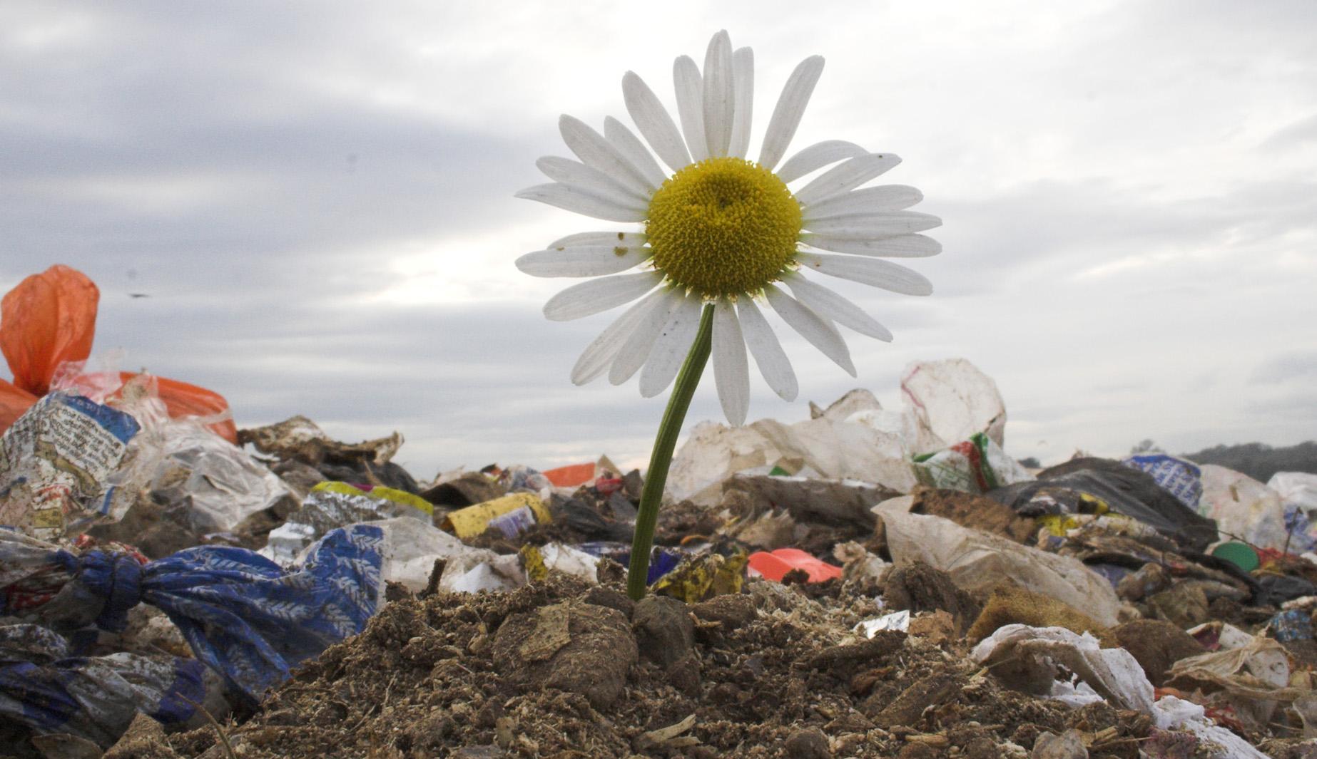 Biodegradabil sau compostabil? Ce ați alege când e vorba despre ambalajele alimentelor?