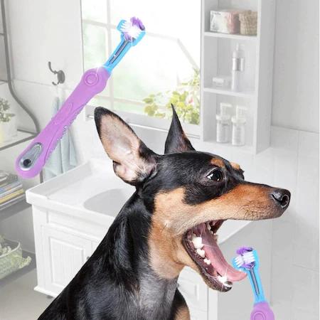 Cinci sfaturi pentru a avea grijă de sănătatea orală la câini și pisici