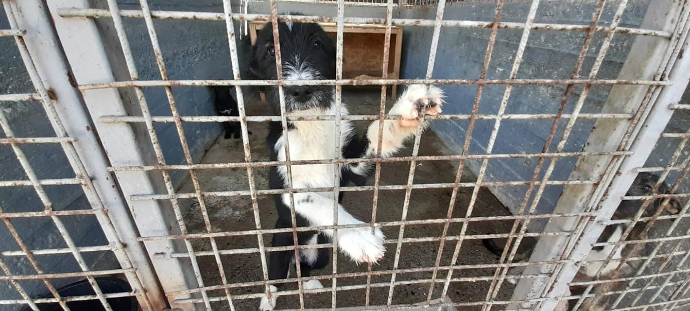 Adăpostul de câini de la Petroșani este funcțional. Aproape 30 de patrupede așteaptă să își găsească stăpâni