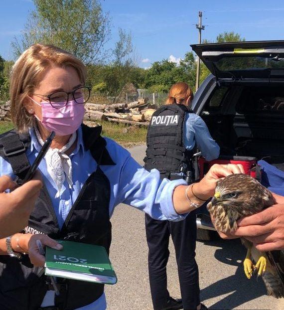 """Șorecar comun, salvat. Pasărea cu aripa ruptă va locui, o vreme, la """"Zoo"""" Hunedoara, după care va fi eliberată în mediul său natural"""