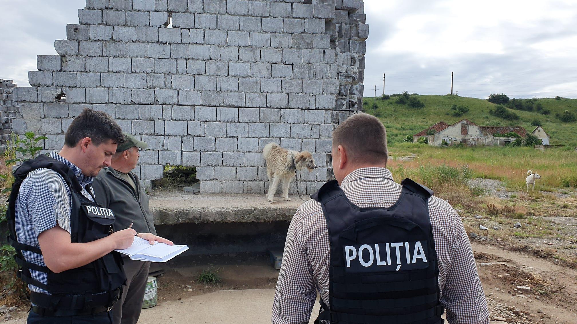 Câine schingiuit cu lovituri de lopată, la Ilia. Bărbatul s-a ales cu dosar penal