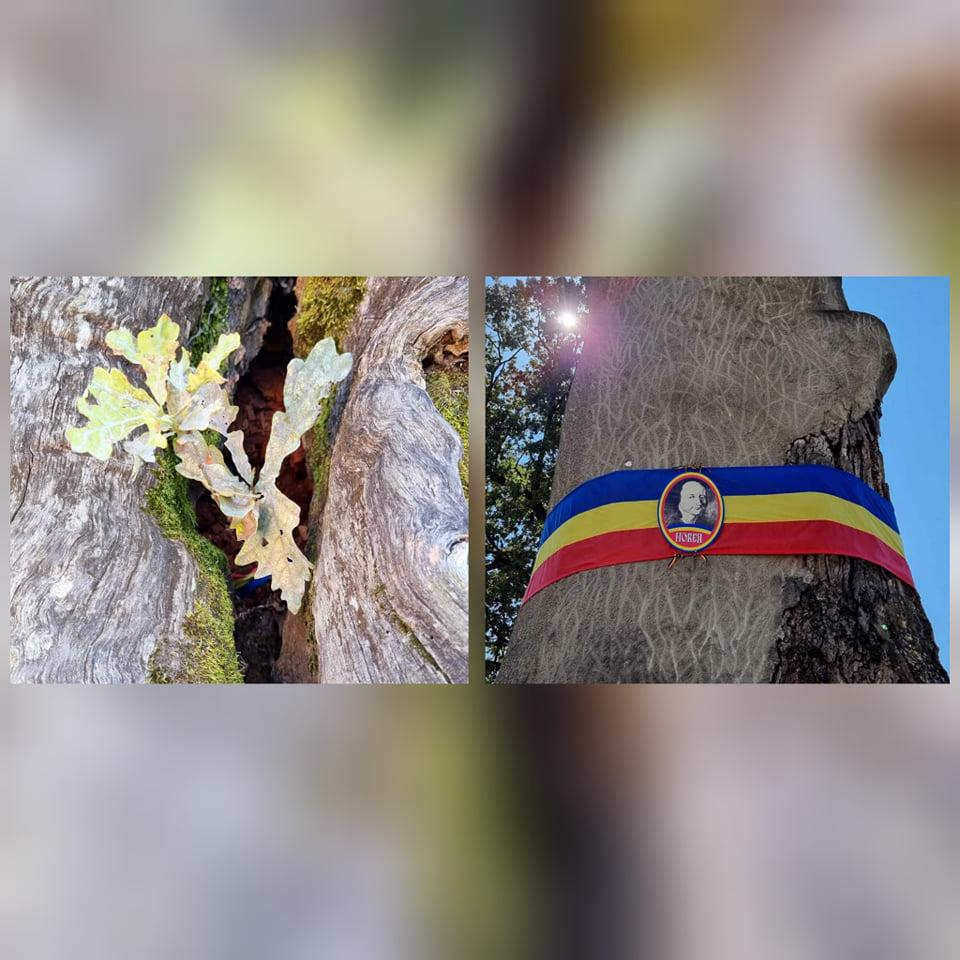 Semn bun la Țebea. Un lăstar de stejar a răsărit pe locul Gorunului lui Horea